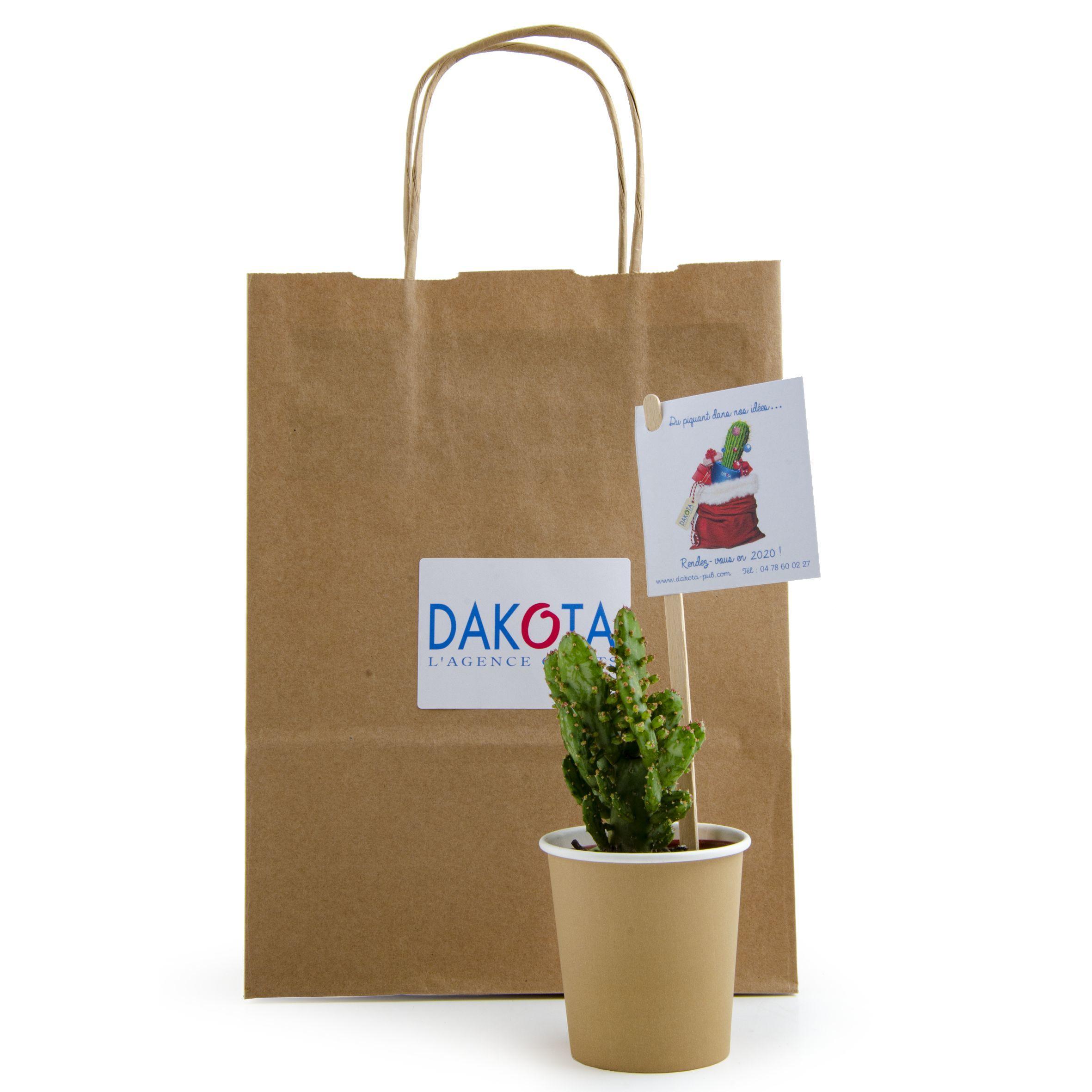 Cactus en gobelet carton