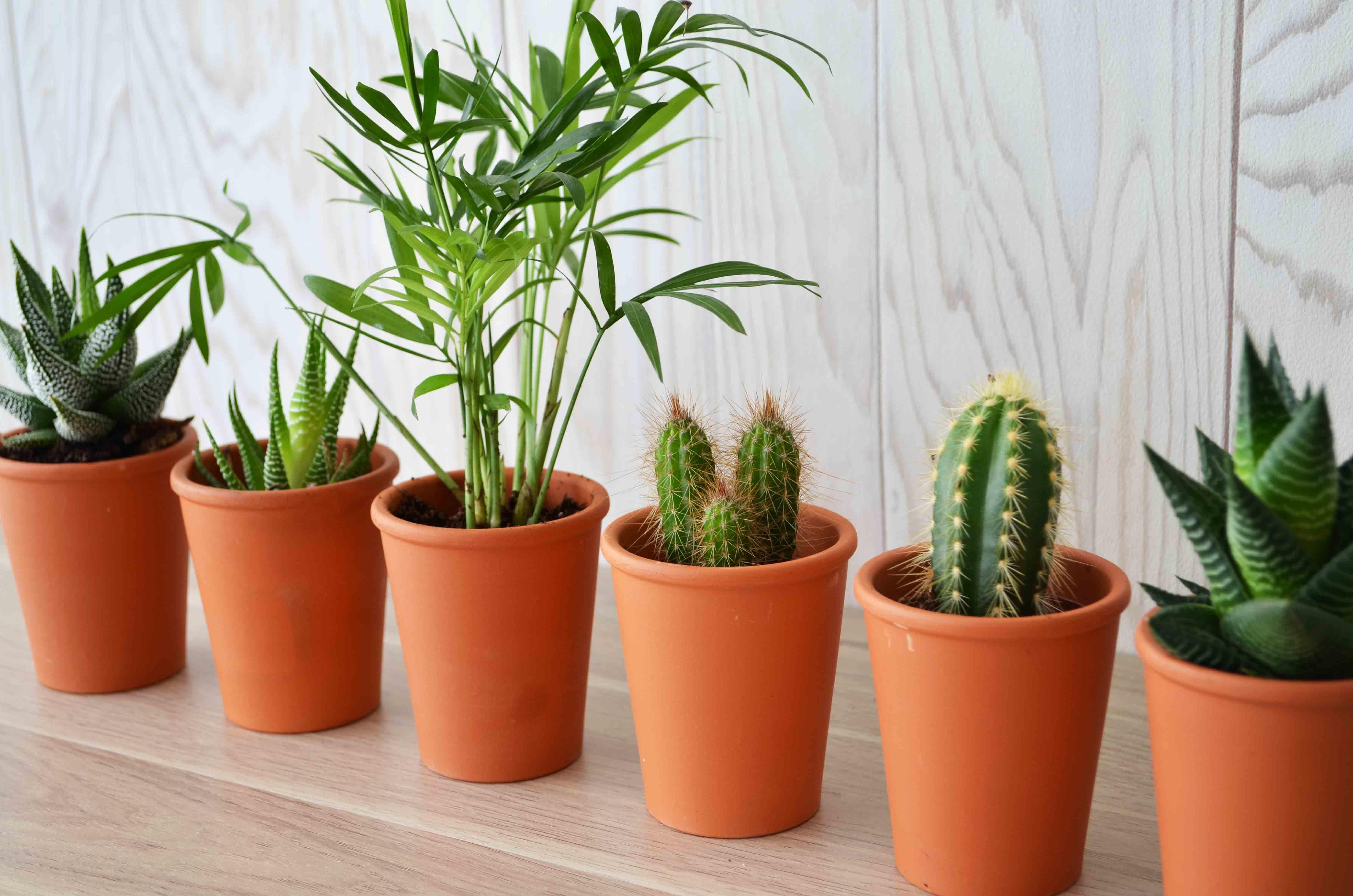 Mini plante  dépolluante en pot - 54-1005-4