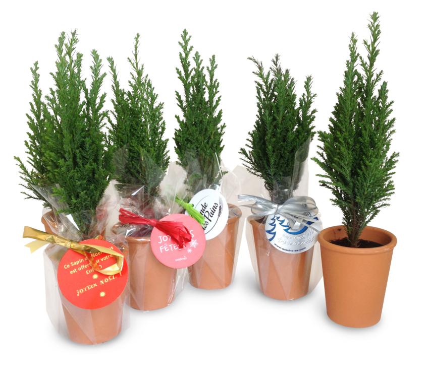 Mini plante  dépolluante en pot - 54-1005-5