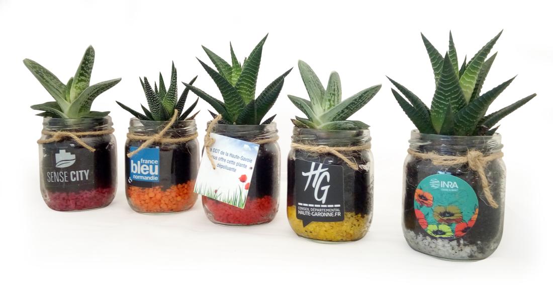 Les Mini Dépolluantes en vase verre
