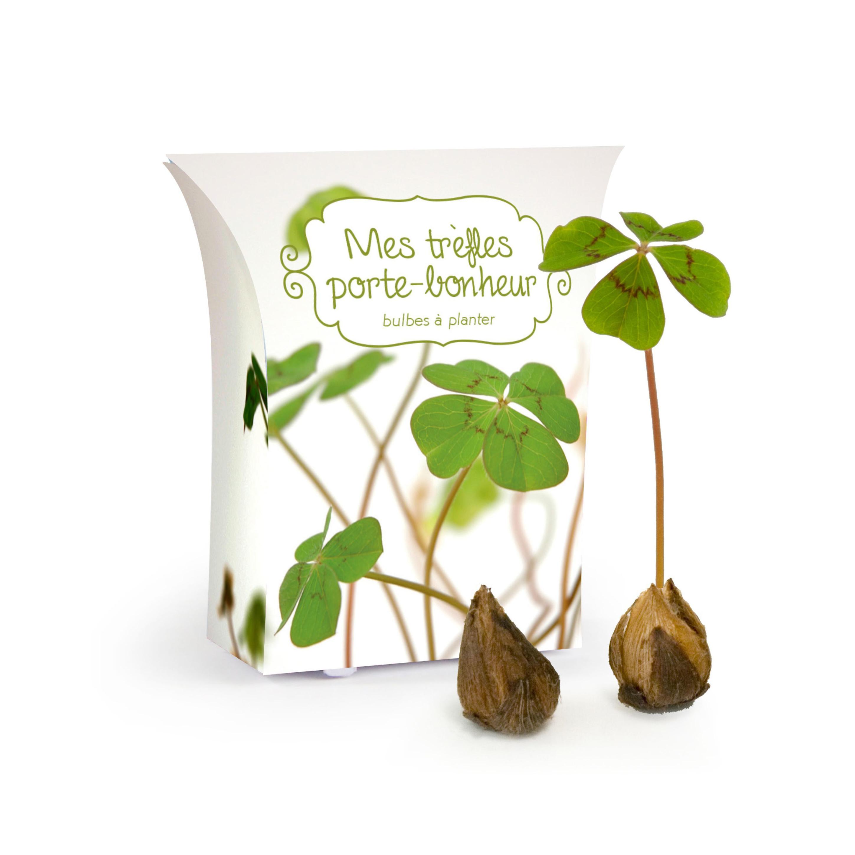 "Boîte ""good luck"" avec bulbes de trèfle 4 feuilles"